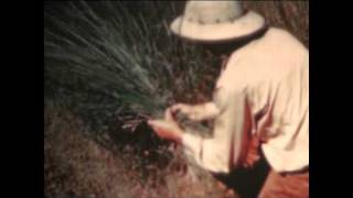 Vintage American Agriculture 1950's  Part 2