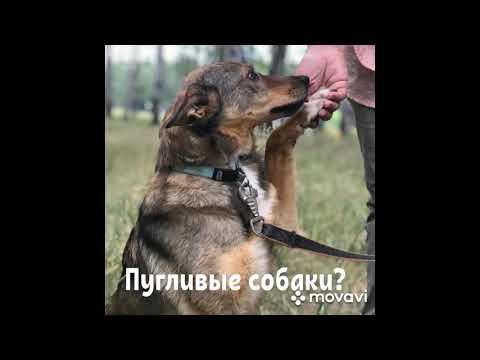 Пугливые собаки в приюте стоит ли брать?
