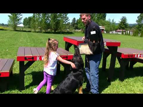 protection-trained-german-shepherd-dog-with-children