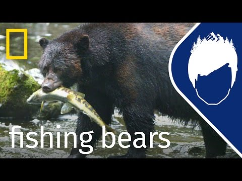 Bears Catching Salmon (Episode 12) | Wild_life With Bertie Gregory