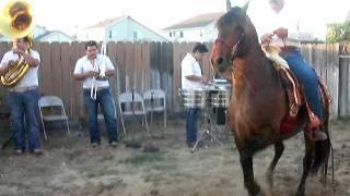 EL SINALOENSE (caballo bailador)
