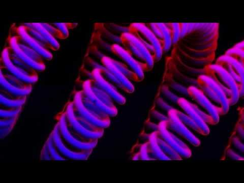 Вольфрамовая нить в лампе накаливания Под микроскопом