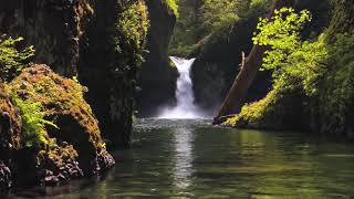 """Peaceful Relaxing Instrumental Music, Calm Meditation Music """"The Forest' by Tim Janis"""