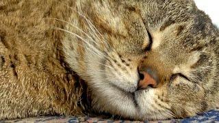 Попробуй разбудить кота. Funny cat. Смешные кошки.