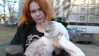 Клуб полудлинношерстных кошек ВАН системы PCA