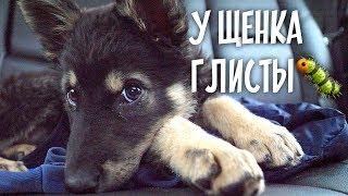 По ветеринарам с щенком и Валиком