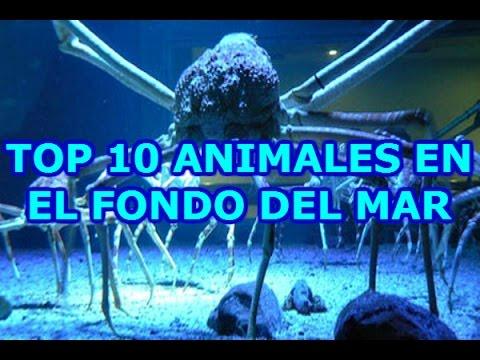 Top 10 animales en el fondo del mar hd youtube - Fotos fondo del mar ...