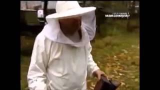 Как проверить мёд? Как и кто нас обманывает? Расследование! (ПЧЕЛОПРОДУКТЫ)