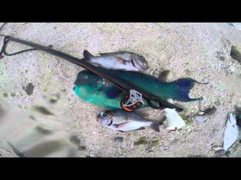 Spearfishing Cook Islands 2015