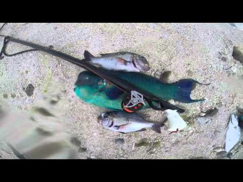 Spearfishing Cook Islands 2015