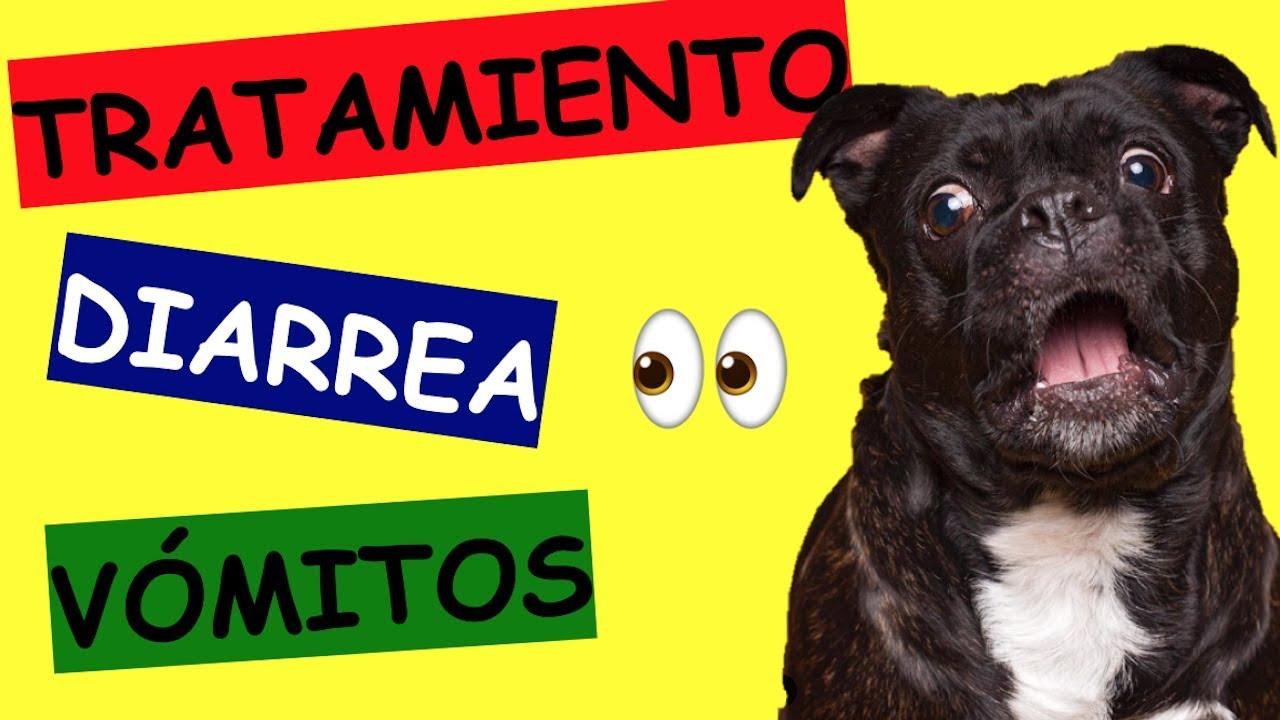como curar la diarrea y vomito de un perro