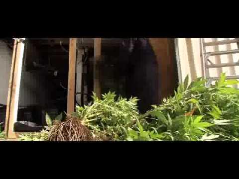Police seize $3m worth of cannabis crops in Sydney drug raid