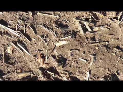 2017 Artifact Hunting - Adena