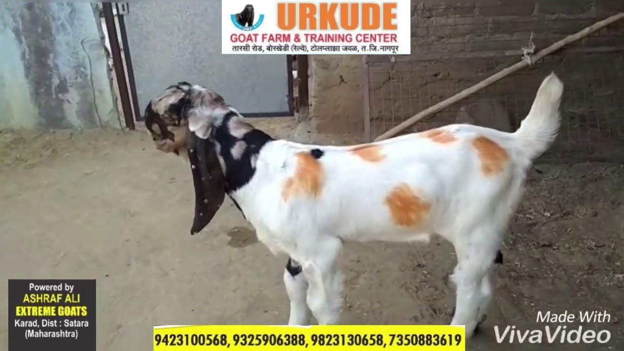 Urkude Goat Farm & Training Center