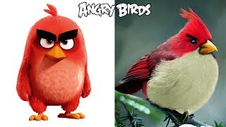Angry Birds In Real Life 2018 | All Characters |