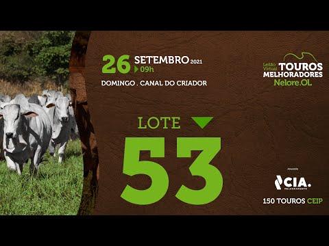 LOTE 53 - LEILÃO VIRTUAL DE TOUROS 2021 NELORE OL - CEIP