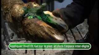 Traitement dermatites Hoof-fit -  lecarréfarago.com