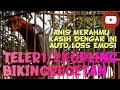 Anis Merah Teler Ngeplong Pagi Hari Suara Burung Plus  Mp3 - Mp4 Download