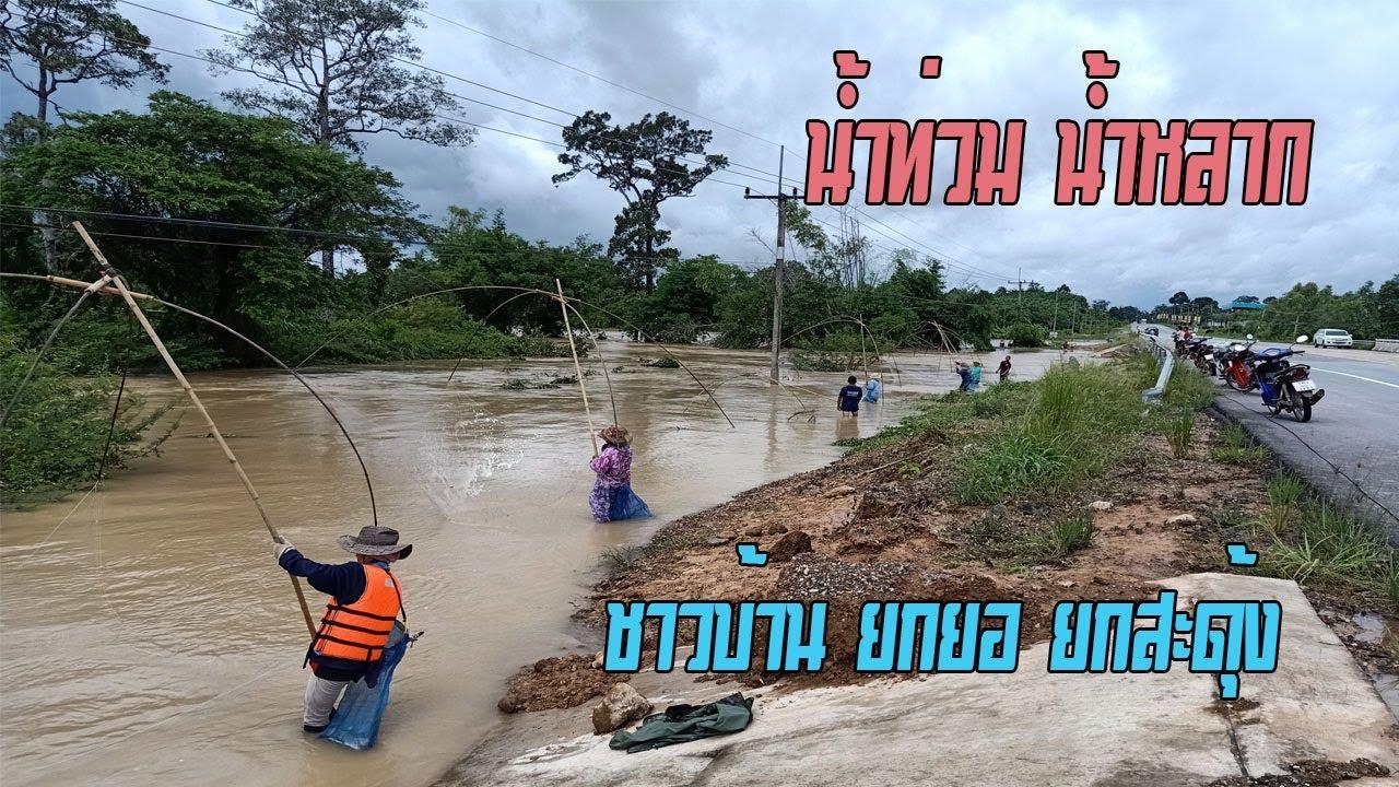 น้ำท่วม น้ำหลาก ชาวบ้าน ยกสะดุ้ง ยกยอ จับปลาเต็มข้างถนน HD