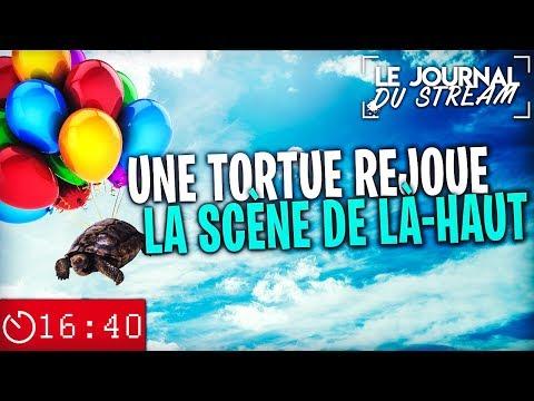 UNE TORTUE REJOUE LA SCÈNE DE LÀ-HAUT - Le Journal du Stream #25.2