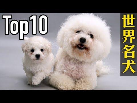世界10大名犬,第一名的狗狗貴得嚇死人