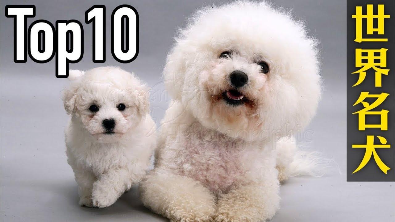 wwwgougou_世界10大名犬,第一名的狗狗貴得嚇死人 - YouTube
