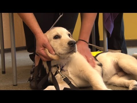 CNIB Guide Dog Training Program