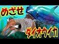 サメを駆逐せよ!! ダイオウイカになってサメ丸のみをめざす!! 後編 サメの海で弱肉強…