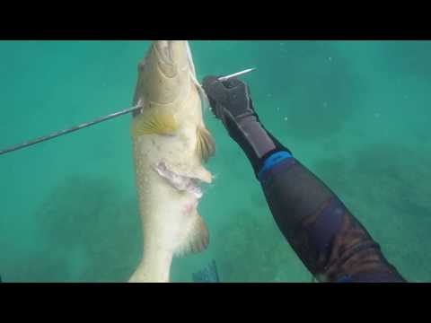 Spearfishing around the Keppel Islands, on The Great Barrier Reef