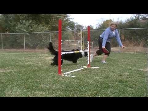 Dog Agility Tip - How To Train A Dog To Wrap A Jump.