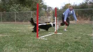 Dog Agility Tip - How To Train A Dog To Wrap A Jump.
