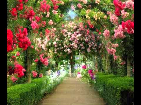 Rose garden design ideas youtube for Rose garden design
