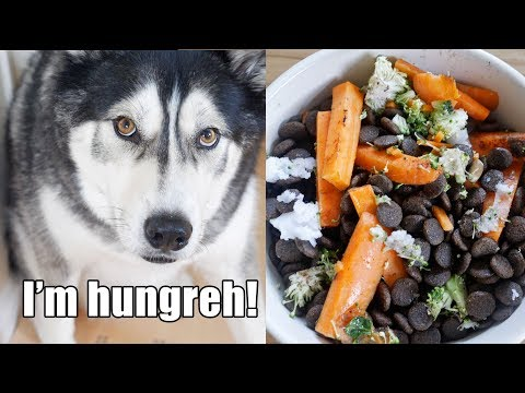 Husky Tries New Food And Demands More! Key reviews food
