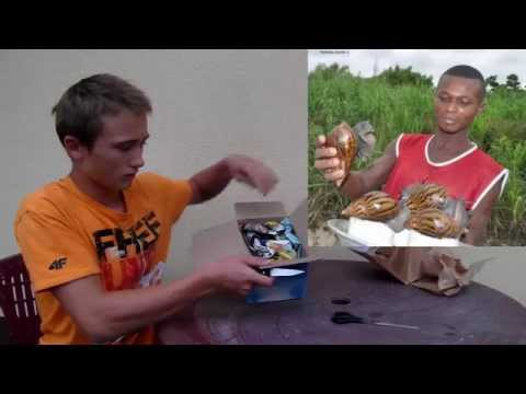 Unboxing Ślimaków Afrykańskich Achatina Achatina