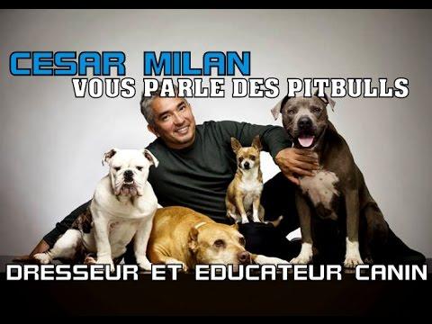 CESAR MILLAN - EDUCATEUR CANIN VOUS PARLE DES PITBULLS (HD)