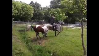 équitation western, trail ranch