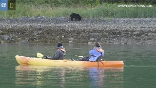 Black Bear Shows Off For Kayakers | Alaska | Lindblad Expeditions-National Geographic
