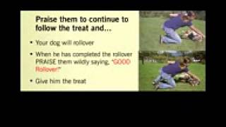 Basic dog obedience training. Tips techniques. Dog house potty behavior crate training.