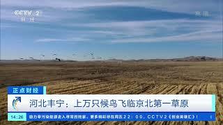 [正点财经]河北丰宁:上万只候鸟飞临京北第一草原  CCTV财经 - YouTube