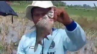 Mancing Ikan Nila Di sawah Menggunakan P...