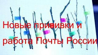 Новые прививки и работа почты России