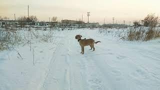 Зимняя прогулка. Арина встречает Роя.