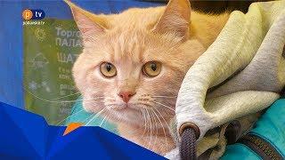 як зробити щеплення від сказу кішці самому