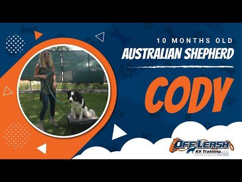 Cody 10 Month Old Australian Shepherd| E Collar Training| Danny Walker Trained