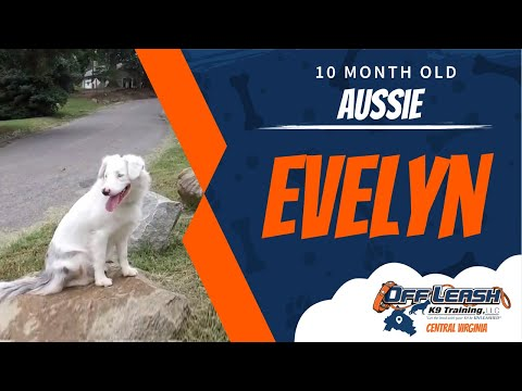 10 Mo. Old Aussie (Evelyn) | Deaf Dog Training Richmond Virginia | Best Dog Trainers in Richmond!