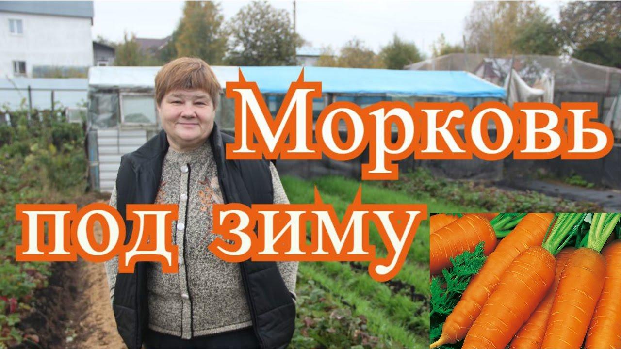 можно ли сажать морковь под зиму