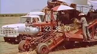 Stock Footage - CALIFORNIA, THE CENTRAL VALLEY AND HOW MAN USES THE LAND FOR AGRICULTURE 1966