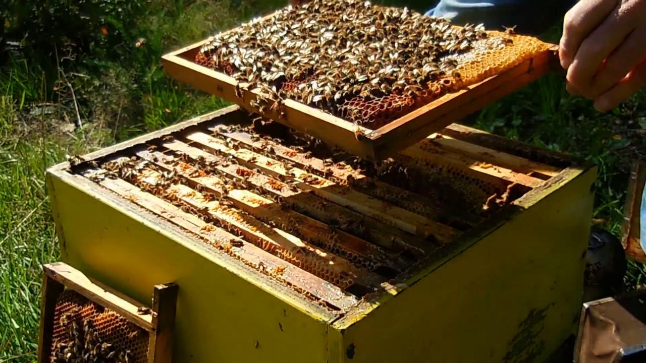 Hoeveel Bijen Zitten Er In Je Kast Voldoende Om De Winter