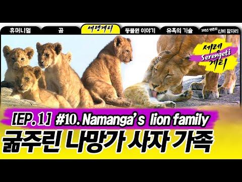 Namanga's liom family - Wildlife in Serengeti EP01, #10, 나망가 사자 가족