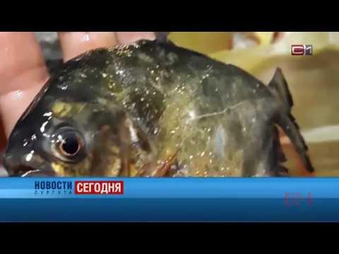 Новости Сургута от 17.07.18